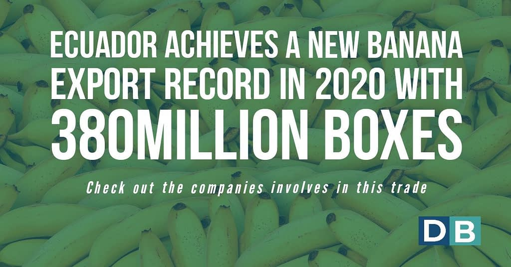 Ecuador achieves a new banana export record in 2020 with 380 million boxes