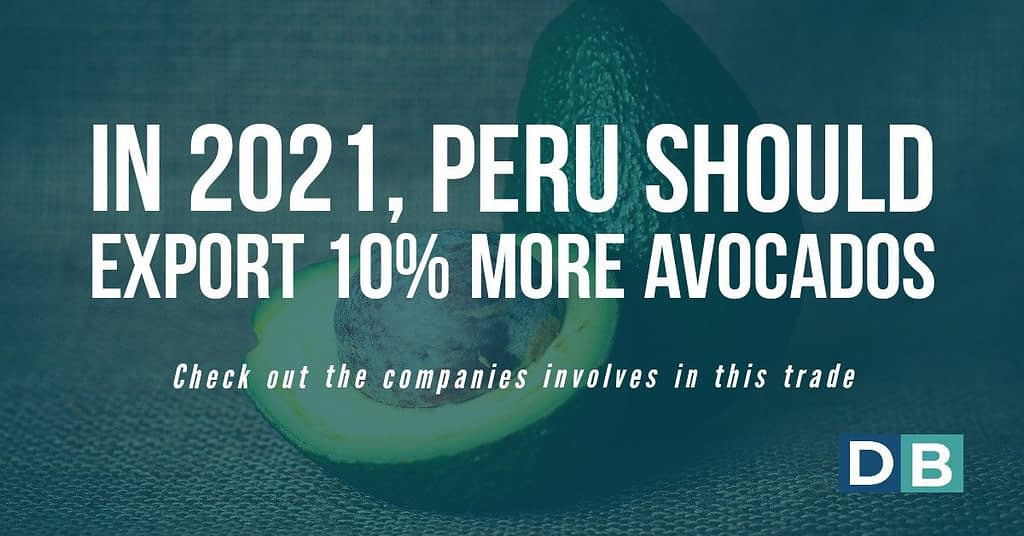 In 2021, Peru should export 10% more avocados